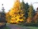 huntsham_court_autumn_driveway