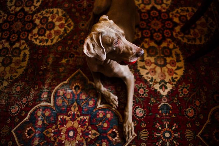 FAMILY REUNION WITH DOG will-richard-luna-0036 copy