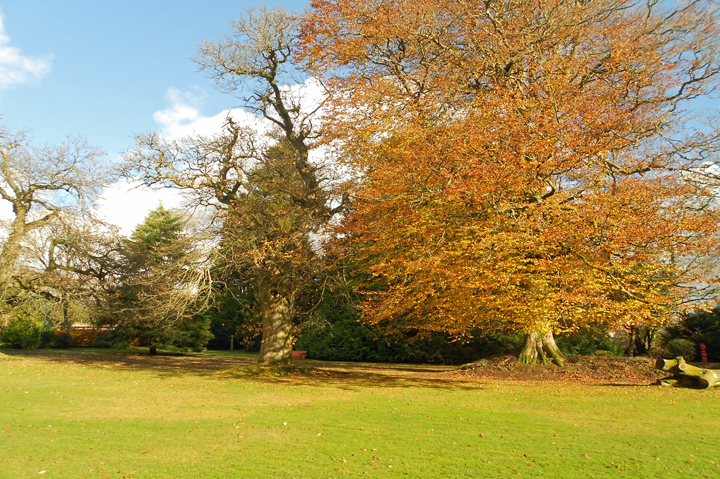 huntsham_court_autumn_upper_lawn_2