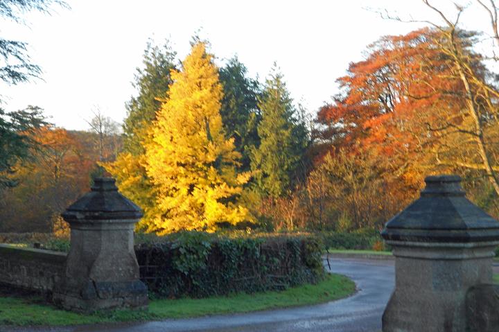 huntsham_court_driveway_autumn